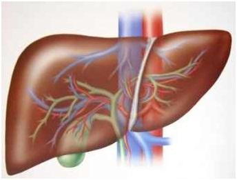Viêm gan có thể gây ung thư không?