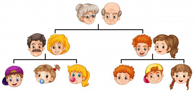 sơ đồ phả hệ gene di truyền